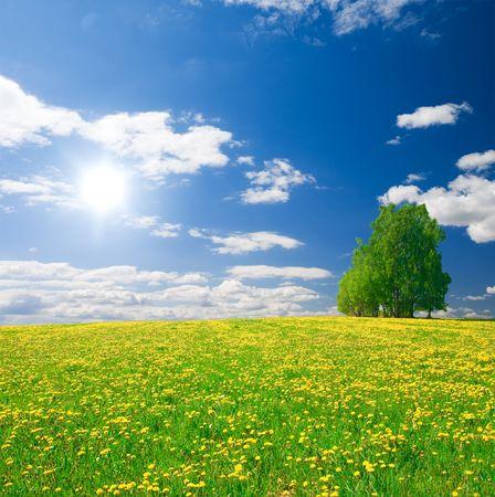 Gele bloemen heuvel onder blauwe wolkenlucht Stockfoto
