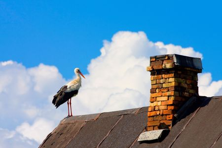 beautiful stork stand on roof Stock Photo - 3606320