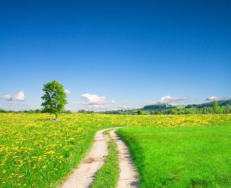 beautiful summer landscape Stock Photo