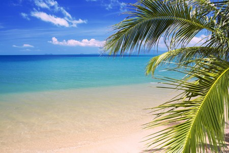 beautiful tropical beach and sea Stock Photo - 4562443