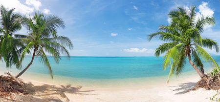 maldives beach: panoramic tropical beach with coconut palm