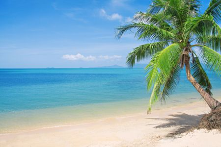 beach with coconut palm and sea photo