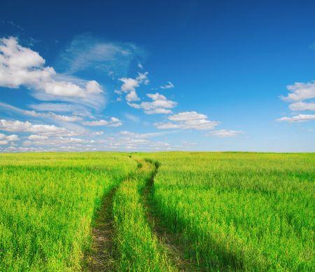 pathway: beautiful summer landscape Stock Photo