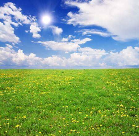 Yellow flowers field under blue cloudy sky Stock Photo - 6103031