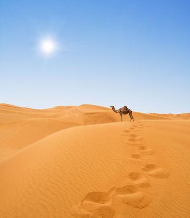 camello: Desierto y camello  Foto de archivo