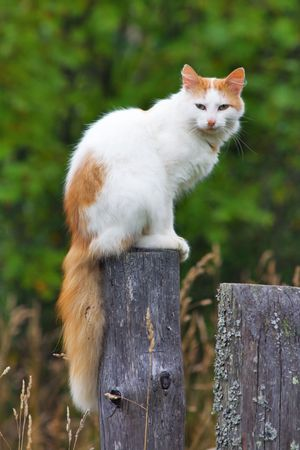 Cat on a fencepost photo