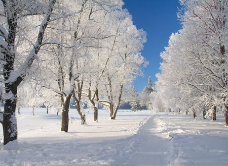 Winter park in snow Stock Photo - 6251667