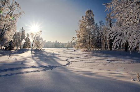 winter forest in snow Stock Photo - 6251657