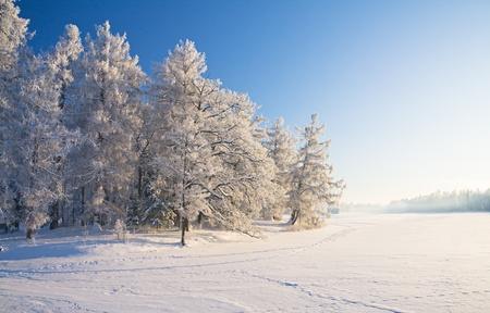 Winter park in snow Stock Photo - 8645737