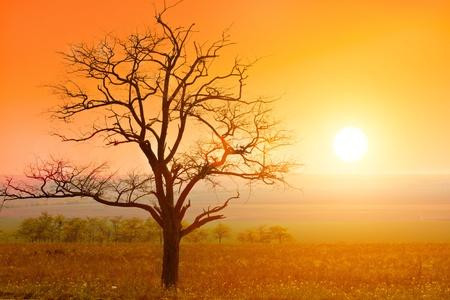 puesta de sol y árbol de otoño
