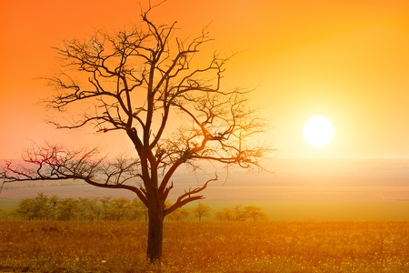 paisaje rural: puesta de sol y árbol de otoño Foto de archivo