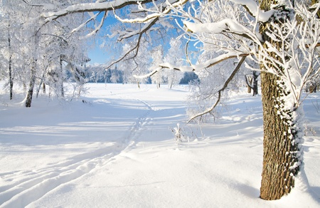 Winter park in sneeuw Stockfoto