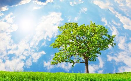 beautiful green tree on meadow Stock Photo - 8645746