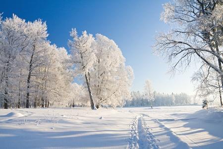 Winter park in snow Stock Photo - 8645748