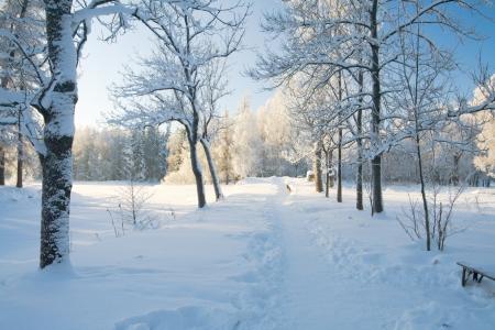 blizzard: Winter Park im Schnee