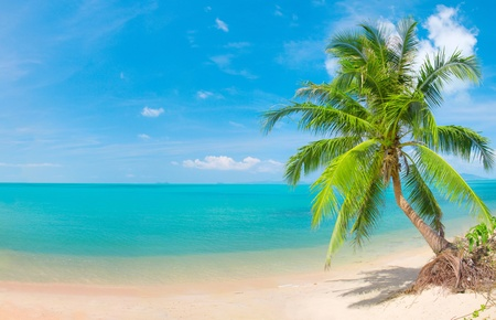 samui: tropical beach with coconut palm Stock Photo