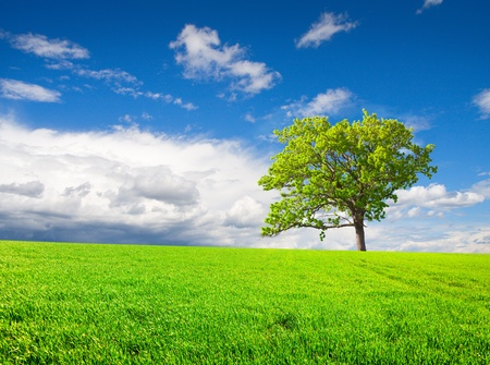 beautiful green tree on meadow