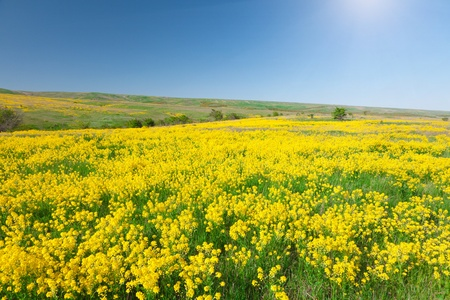 Green field with flowers under blue cloudy sky Stock Photo - 8645805