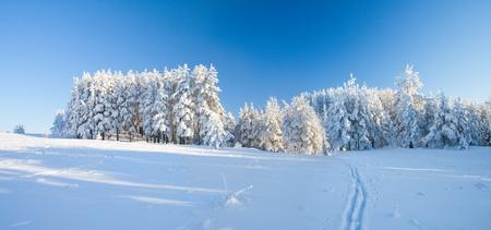 Winter park in snow photo