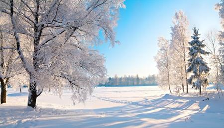 bosque con nieve: Parque de invierno en la nieve Foto de archivo