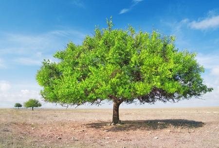 torrid: three  green tree in torrid steppe