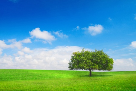 tree on meadow Stock Photo - 8852080