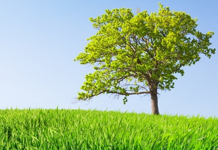 tree on meadow Stock Photo - 8852110