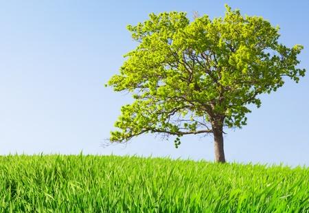 tree on meadow Stock Photo - 8852110