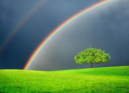 Green Field mit Baum und double rainbow