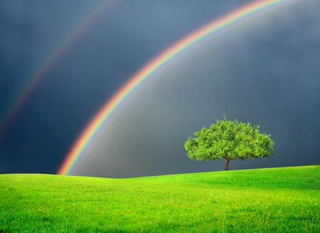 Green field with tree and double rainbow Stockfoto