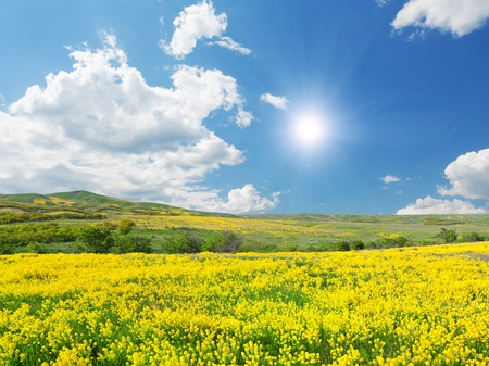 Green field with flowers under blue cloudy sky Stock Photo - 8852149
