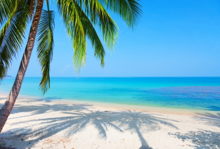 palm fruits: tropical beach with coconut palm Stock Photo