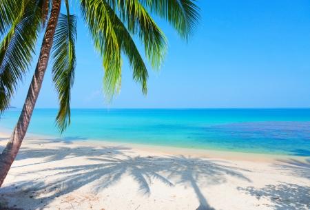 beach palm: tropical beach with coconut palm Stock Photo