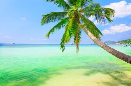 sea with coconut palm Stock Photo