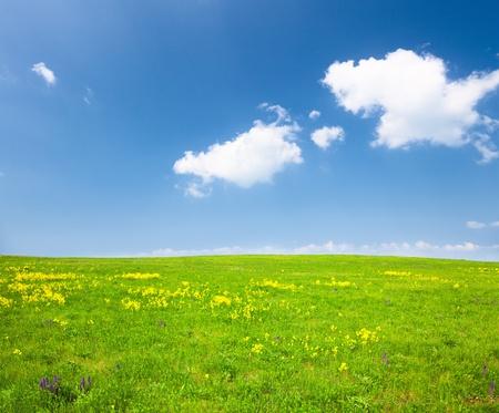 Groen veld met bloemen onder blauwe wolkenlucht Stockfoto