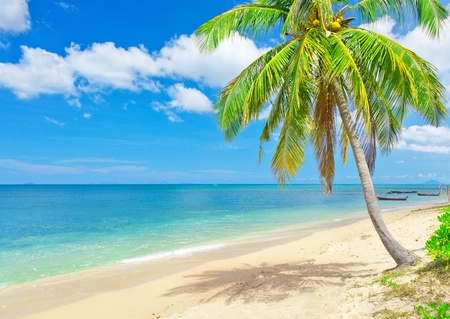 strand met coconut palm en zee