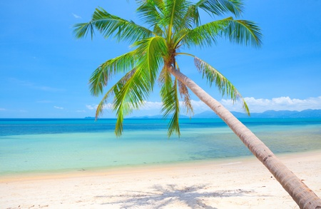 palm fruits: beach and coconut tree Stock Photo