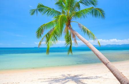 beach and coconut tree Stock Photo