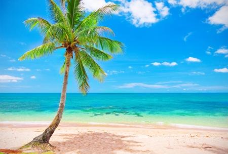 beach and coconut tree photo