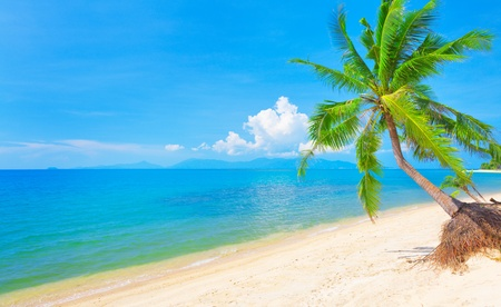 beach and coconut tree Stock Photo