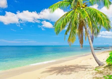 Playa de Palma de coco y mar Foto de archivo