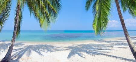 panoramic: panoramic tropical beach with coconut palm