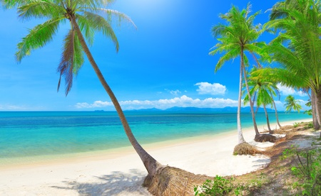 panoramic tropical beach with coconut palm  Stock Photo