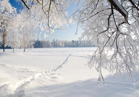 Winter bos in de sneeuw Stockfoto