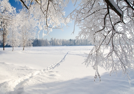 landscape: Winter forest in snow