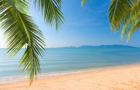 Palm blad en tropisch strand