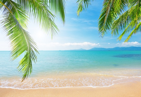 Palm and tropical beach photo