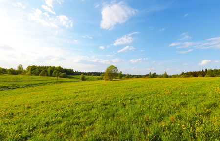Green field with flowers under blue cloudy sky Stock Photo - 11870727