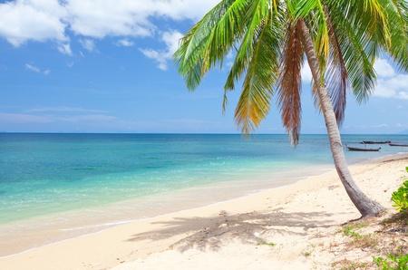 koh: playa tropical con palmeras de coco. Koh Lanta, Tailandia