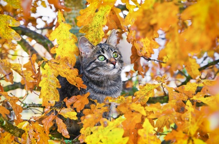 Beautiful kitty sitting on the autumn tree